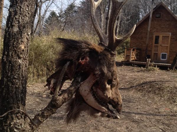 鹿の頭部を安全な場所に