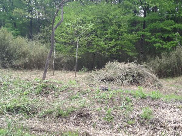 竹を刈って積み上げ