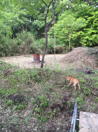 まだまだ竹に覆われている破滅小屋