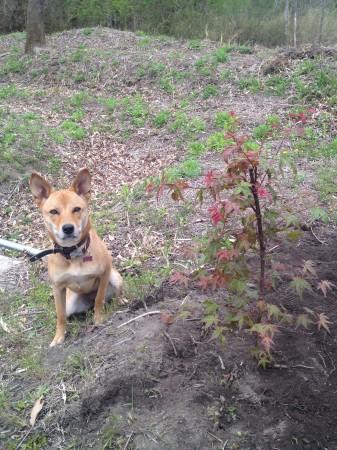 パッキンも木を植えてご機嫌
