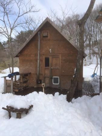 破滅小屋は無事。三角屋根サイコー。