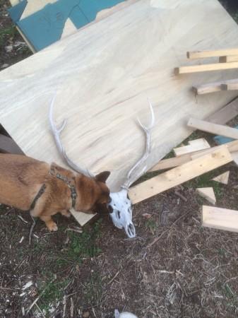 お古の装飾品である鹿。ニッチは興味津々。