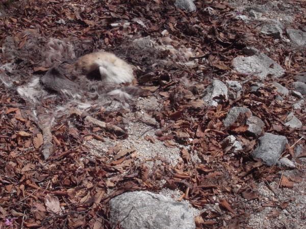 鹿の死体3。こちらも跡形無し。