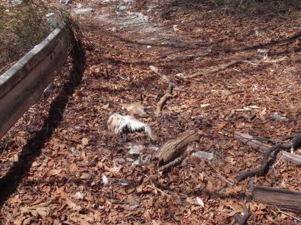 鹿の死体4。この後にラスボスが控える予感高まる。