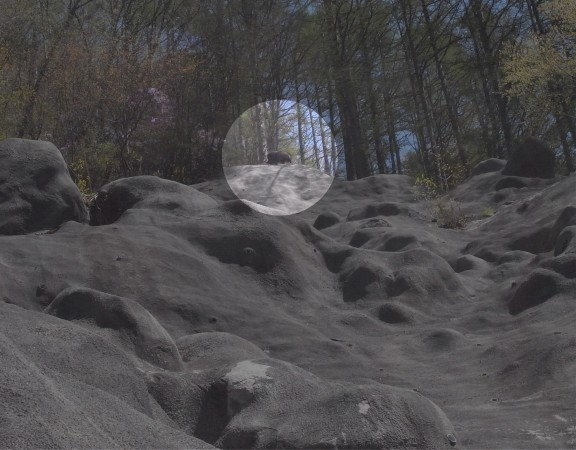 崖の上にいたカモシカ。最初、熊かと思った。