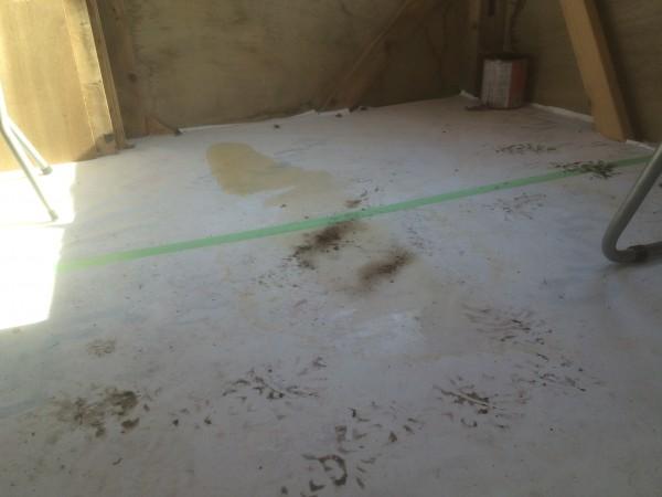 床が水たまりでビショビショ……