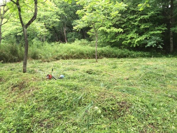 草刈りを終えた後の様子